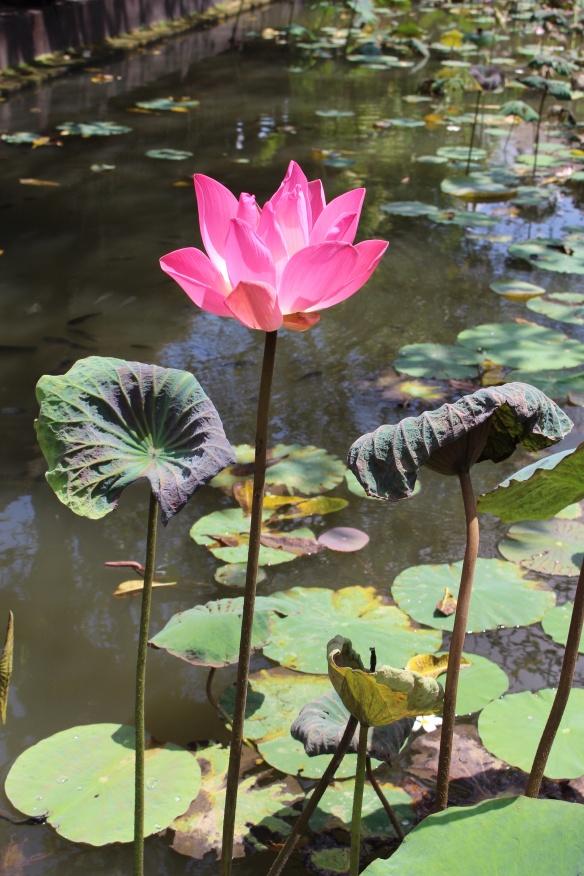 """Lotus -6"""" diameter"""