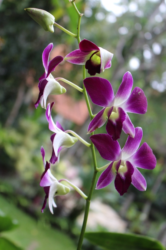 wild orchids and other tropical flowers are everywhere you turn
