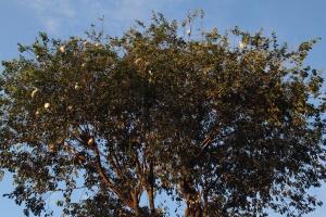 Heron-topped trees